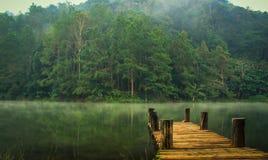 Угрызение-ung, сосна Forest Park Стоковые Фотографии RF