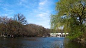 луг в парке Стоковое Изображение RF