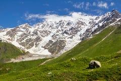 луг зеленого цвета горы снежного пика Стоковые Изображения RF