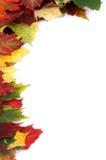 Угловая граница кленового листа Стоковое Изображение