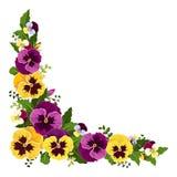 Угловая предпосылка с цветками pansy также вектор иллюстрации притяжки corel Стоковая Фотография RF