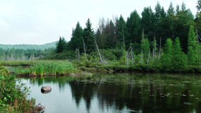 луг с прудом и деревьями Стоковая Фотография