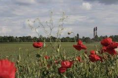 Удаленные камины фабрики в цветках макового семени и пасмурных ландшафтах стоковые фотографии rf