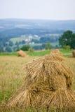 удары овса поля Стоковые Фото
