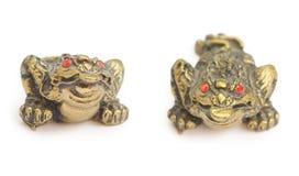 удачливейшая жаба дег Стоковая Фотография RF