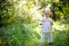 удерживание пущи младенца выходит маленькие клены Стоковое Изображение