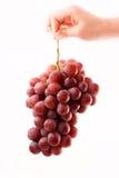 удерживание руки виноградин Стоковая Фотография