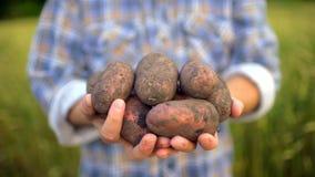 Удерживание фермера в продукте рук биологическом картошек Концепция: Рынок фермера, органическое сельское хозяйство, урожай сбора акции видеоматериалы