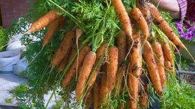 Удерживание фермера женщины в руках пук морковей видеоматериал
