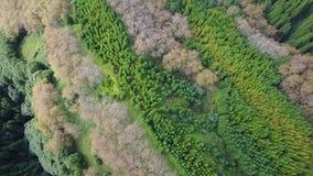 Удивительнейшие зеленые цвета архипелага Азорских островов сток-видео