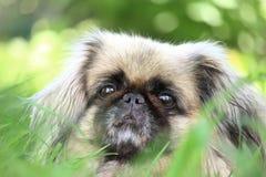 Удивленная собака Стоковое Фото