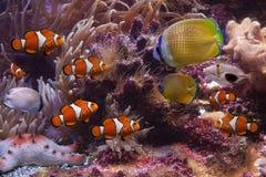 удит starfish тропические Стоковое Фото