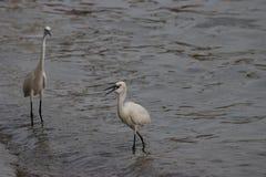 2 удя крана берегом моря стоковое фото rf