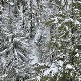 Уединение зимы Стоковое Изображение RF