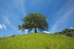 уединенное дерево стоковое изображение rf