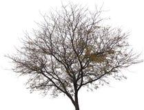 Уединенное дерево в wintertime стоковое фото rf