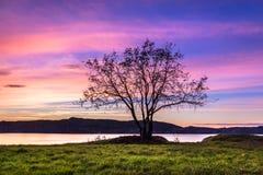 Уединенное дерево на розовом заходе солнца стоковое изображение
