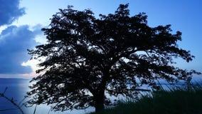 Уединенное дерево Timelapse сток-видео