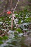 Уединенные красные лист среди зеленого роста стоковое фото
