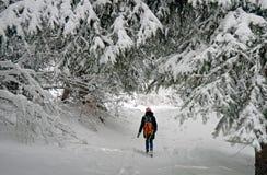 Уединенный женский hiker идет через лес покрытый снегом в высокогорном лесе в зиме стоковые фото