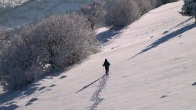 Уединенный турист идет через снег в путешественнике леса горы в человеке леса a зимы снежном молодом с a акции видеоматериалы