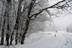 Уединенный ходок прочь через замороженный лес стоковое фото