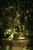 Уединённая ванна птицы в покинутом саде Этот похожий на джунгл сад Стоковые Изображения