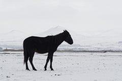 Уединённая лошадь Стоковая Фотография RF