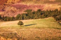 Уединённое дерево Великобритания стоковая фотография