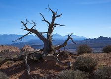Уединённое дерево в пустыне Стоковая Фотография