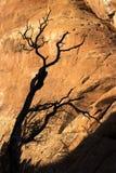 Уединённое дерево в саде ` s дьявола Стоковое Фото