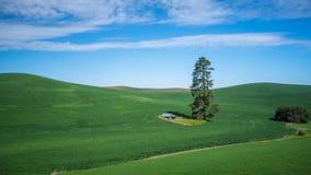 Уединённое дерево и лачуга в Palouse стоковые изображения rf