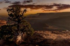 Уединённое дерево над каньоном пустыни на заходе солнца Стоковая Фотография RF