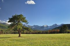 Уединённое дерево сосенки Стоковое Изображение