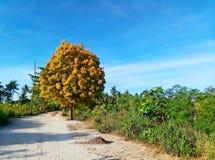 Уединённое желтое дерево лист в пути Стоковые Фотографии RF
