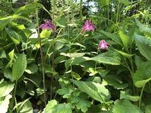 Уединённые розовые цветки в лесе Стоковая Фотография