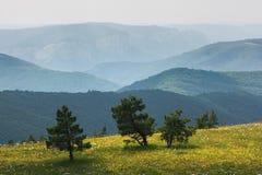 Уединённые сосны на краю выгона горы Стоковое Изображение