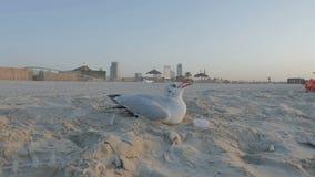 Уединённый бело-серый альбатрос птицы, чайка на песке на пляже сток-видео