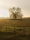 Уединённый вал в поле Стоковое Изображение