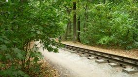 Уединённый велосипедист управляет вдоль пути в лесе осени вдоль железной дороги видеоматериал