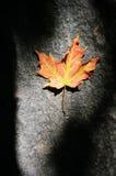 Уединённый кленовый лист в тени Стоковая Фотография RF