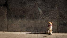 Уединённый кот нося красный пестрый платок стоковая фотография rf
