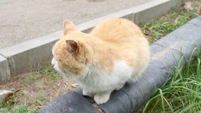 Уединённый красный кот сидит на магистрали парового отопления и ждет свое предпринимателя видеоматериал