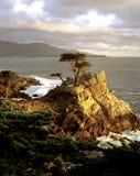 Уединённый Cypress стоковые фотографии rf