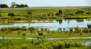 Уединённый Egret в болоте Стоковая Фотография RF