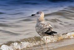 Уединение чайки Стоковые Фотографии RF