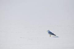 Уединение чайки Стоковые Изображения
