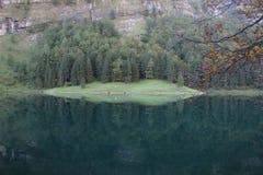 уединенное озеро Стоковые Фото