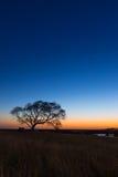 Уединённая вертикаль захода солнца дерева Стоковое Изображение RF