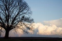 Уединённая липа перед изменять погоду Стоковые Изображения